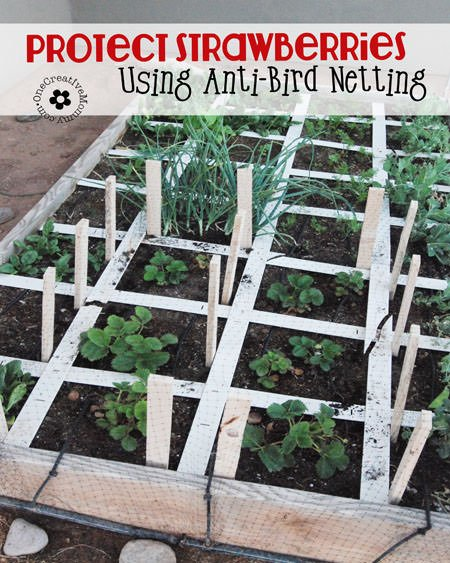 Are your strawberries feeding the neighborhood birds? Protect them with Anti-Bird Netting, and maybe some will actually make it to the table! {Tutorial from OneCreativeMommy.com}