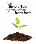 One simple tool to protect plants from frost! This recycled item actually helps your seedlings through early spring! {OneCreativeMommy.com} Gardening Tips