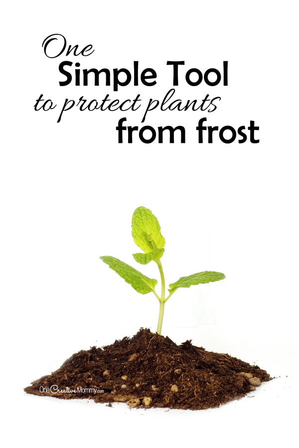 One simple tool to protect plants from frost for Easy to keep garden plants