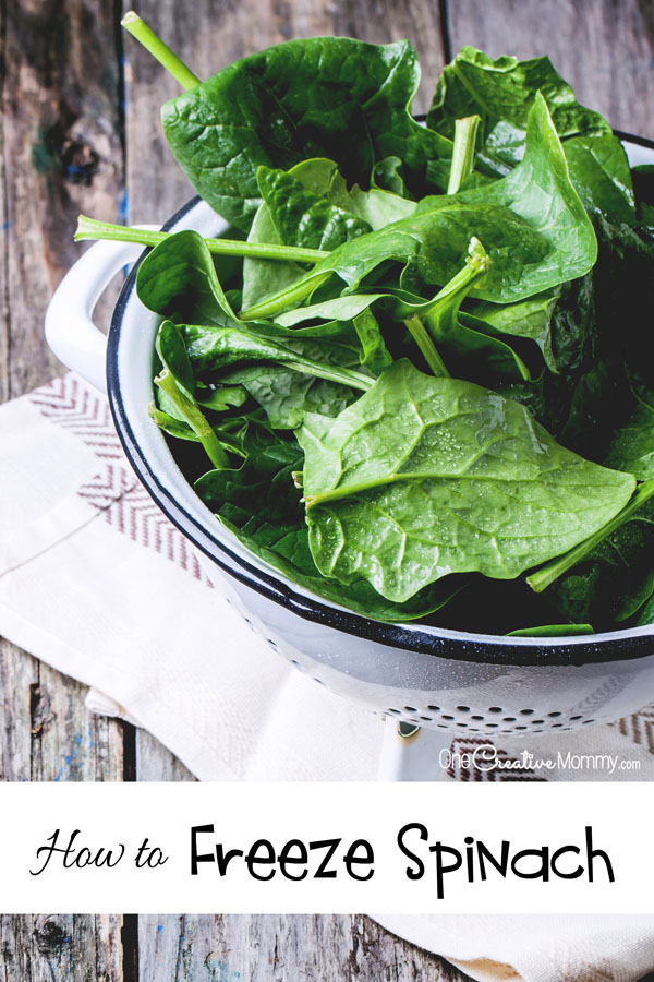 How do you enjoy garden spinach all year long? Freeze it! It's perfect as a side dish, in soups, dips and smoothies. {OneCreativeMommy.com} Simple tips with pictures | How to Freeze Spinach
